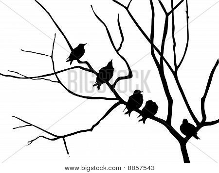 vector silhouette of the birds on branch tree on white background