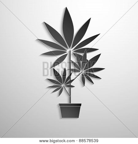 symbol of growing marijuana cut black paper.
