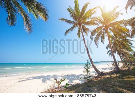 tropical beach and coconut palm trees