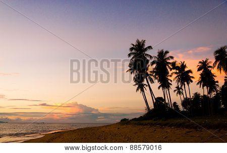 Idyllic Wallpaper Palm Paradise