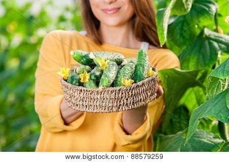 Close up of female gardener holding a basket with cucumbers