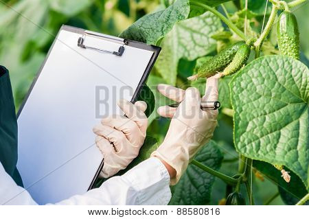 Engineer examining plants.