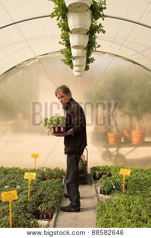 Man In A Garden Center, Choosing Plants