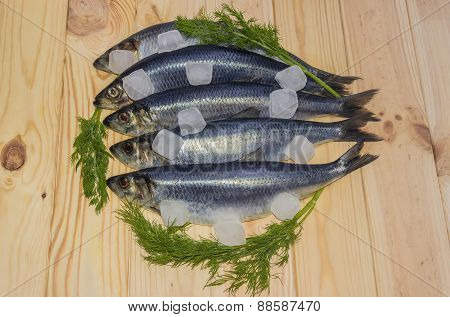 Atlantic Herring With Ice Cubes