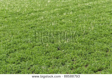 Plants In A Field