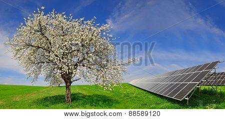 Solar energy panels with flowering tree