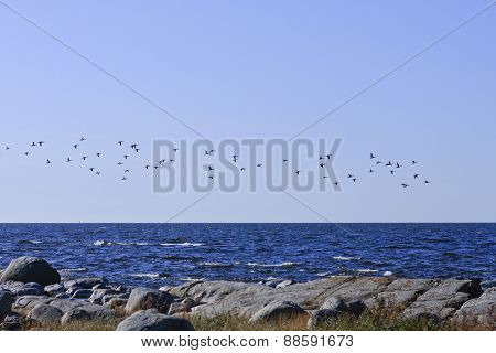 Birds above the coastline in distance.