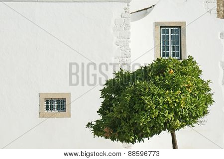 windows with tree