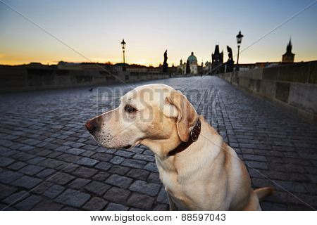 Dog At The Sunrise