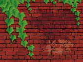 Old dirty red bricks wall with ivies