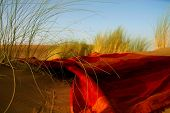 image of dune grass  - moroccan desert scenery with desert grass plantation and ornametal red blanket dunes on the horizon and neverending footsteps on the glowing sand surface  - JPG