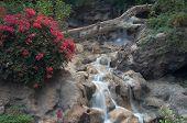 pic of waterfalls  - Flowers and waterfall in indoor garden - JPG