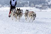 foto of sled-dog  - Group of sled dogs running through lonely winter landscape - JPG