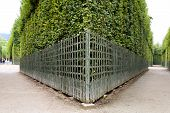 picture of versaille  - Royal Garden in the Versailles Castle Paris France Unesco - JPG