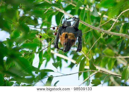 bat hanging on a tree branch