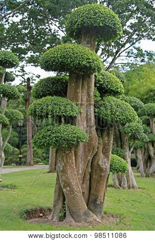 bonsai trees in botanical garden