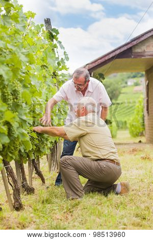 Elderly Vinemakers