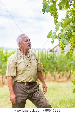 Summer Examination Of Grapevines