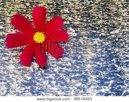 red flower on a background of ruberoid