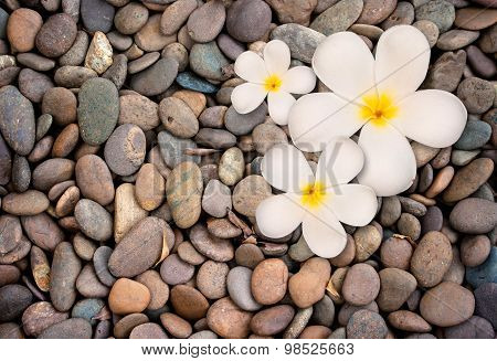 Frangipani Flower On Stone Background