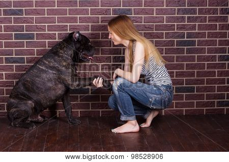 Girl In Jeans And A T-shirt Cane Corso Dog Learns The Command Give Paw
