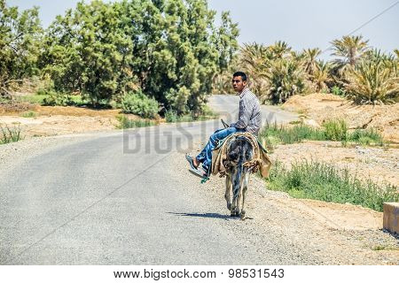 TAFILALT, MOROCCO, APRIL 12, 2015: Local man travels on donkey in oasis
