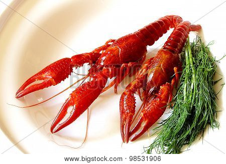 Crayfish Red Boiled European Austropotamobius Pallipes