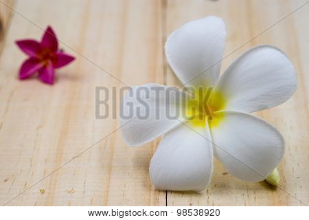 Single White Plumeria On Wood Floors.