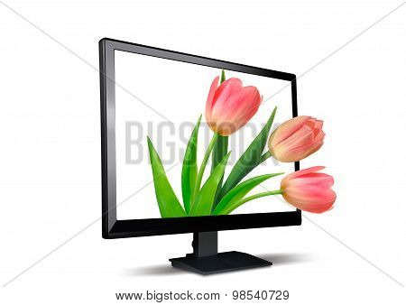 Lcd Monitor And Tulips The Isolated