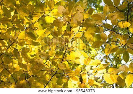 Autumn Birch Brach retro