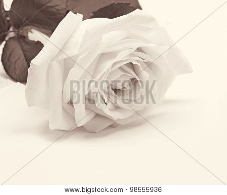 White Rose Close-up As Background. In Sepia Toned. Retro Style