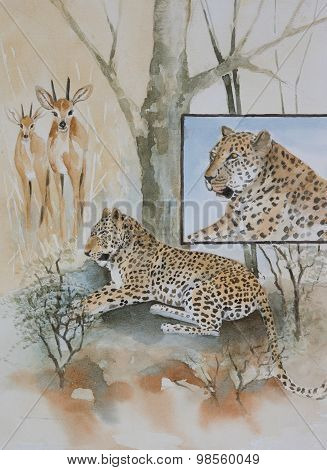 Original watercolour, leopards and their prey