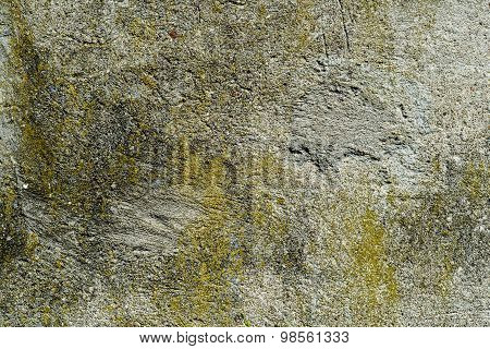 Algae and Mold On A cement wall.