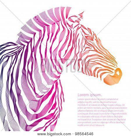 Animal illustration of vector zebra silhouette. Vector