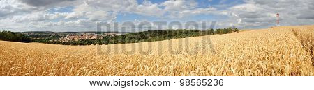 Panorama Cornfield