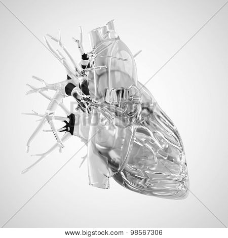 medically accurate illustration of human heart made of glass