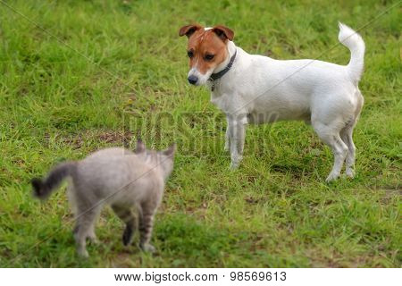 kitten and dog on green lawn