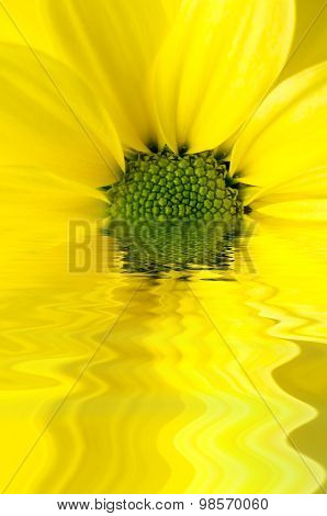Yellow Flower Reflected In Watery Ripples
