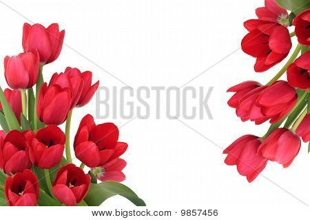 Red Tulip Flower Border