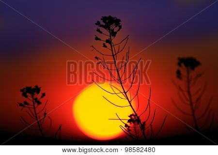 wild flower against big sun background
