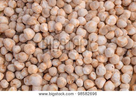 Barometer Earthstars Mushrooms in vegetable market thailand