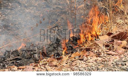 Fire Is Burning Dry Leaves.