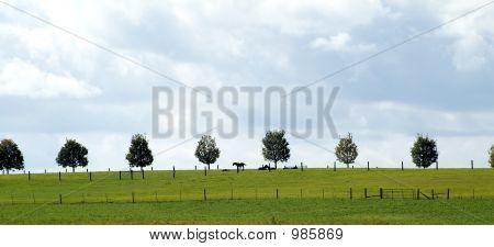 Treeline With Horses