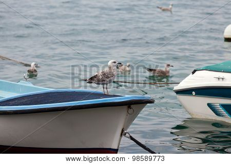 Young seagull on a boat