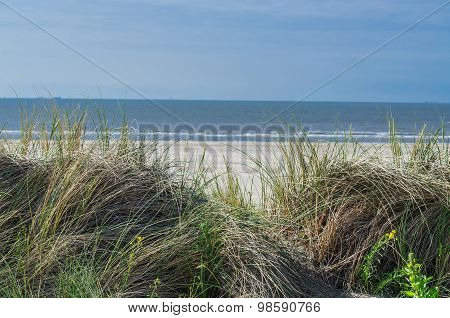 Seagrass, Beach And Sand Dunes