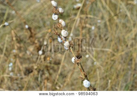 Snails on a dried lake