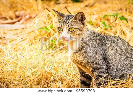 Gray Cat Sitting On Dry Hay In The Garden