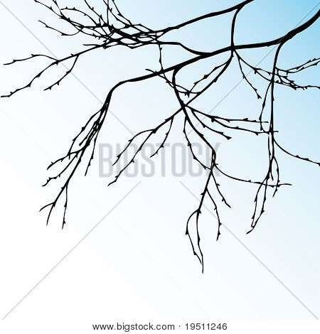 Vegetation background Branch.