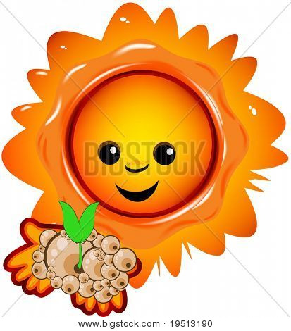 Sun and green plantlet