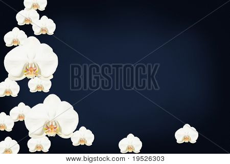 white orchid border - navy blue background